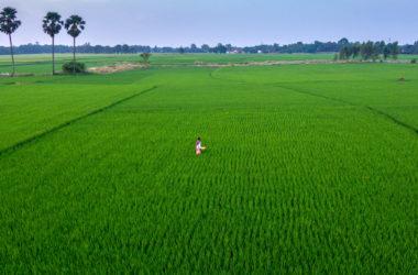 Hacer que las pequeñas explotaciones agrícolas sean más sostenibles y rentables